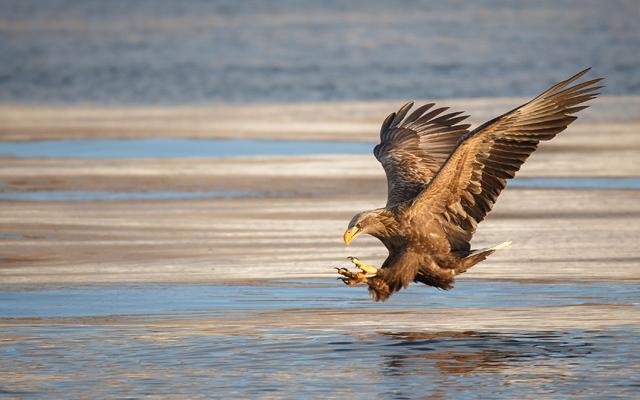 Fotografi divej prírody kde ste? Už len 5 dní do konca súťažného kola wildlife!