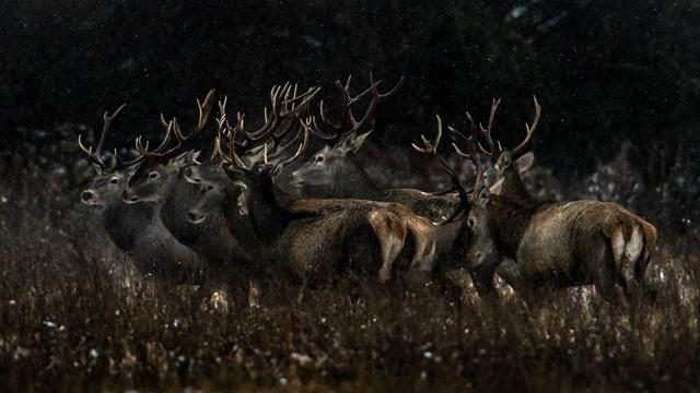 Ako sa fotia víťazné fotografie podľa Tomáša Hulíka