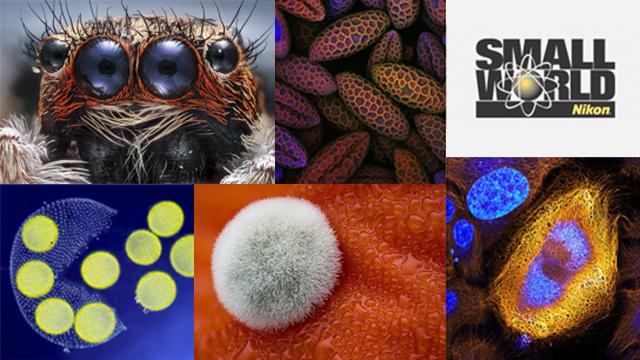 Očarujúci mikroskopický svet v súťaži Nikon Small World