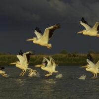 Staffan Widstrand, Wild Wonders of China, wildlife fotograf, reportér, Nikon, Nikon ambasádor, Nikon D4