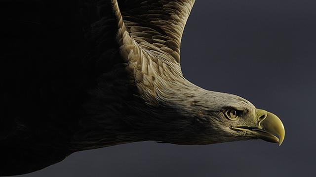 Staffan Widstrand: Fotografiou za zachovanie svetového prírodného dedičstva