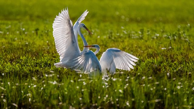 Nikon, Nikon ambasádor, Tomáš Hulík, wildlife, vtáky, fotografovanie vtáctva, divoká príroda, fotografia
