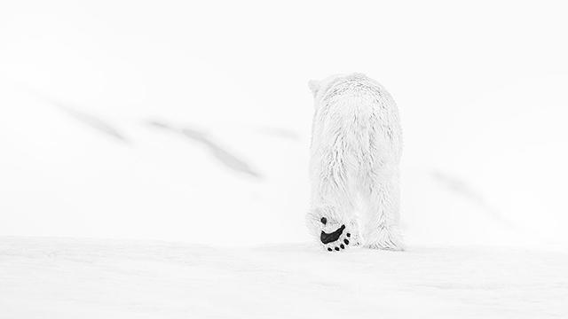 SOM | David Yarrow, európsky Nikon ambasádor